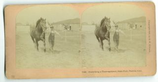 Exercising a Thoroughbred, State Fair, Pueblo, Colorado [1907 stereo card]. B. W. Kilburn, publisher
