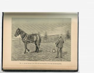 The Horse's Friend; A Manual for Training the Horse and Keeping Him Healthy